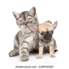 Cute kitten hugging chihuahua puppy. Isolated on white background