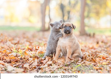 Cute kitten hugs and kisses a stray puppy on fallen autumn leaves. Empty space for text