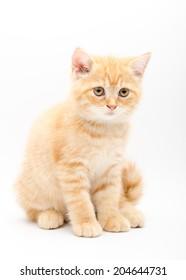 Cute kitten isolated