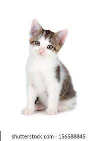 Cute kitten isolated on white.