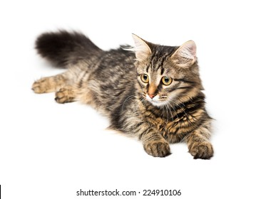 Cute kitten with isolated on white background