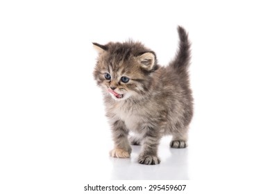 Cute kitten licking lips up on white background isolated