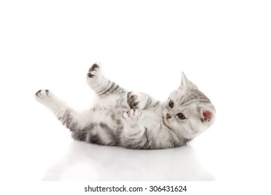 Cute kitten lies on his back and plays on a white background isolated