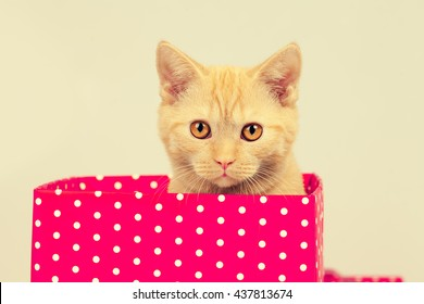 Cute kitten look out of the red gift box