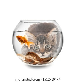 Cute kitten looking at fish in aquarium against white background