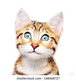 Cute kitten looking up.