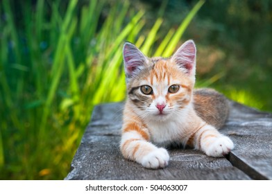 Cute kitten lying on a wooden bench and looking into the camera