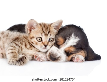Cute kitten lying with sleeping basset hound puppy. isolated on white background