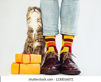 Cute kitten, men's legs in colorful socks and stylish, retro shoes on a white background. Close-up. Concept of style, fashion and beauty