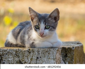 Cute kitten in the nature