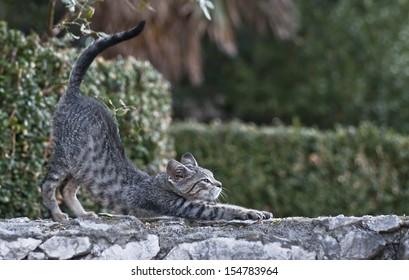 Cute kitten on the stone wall