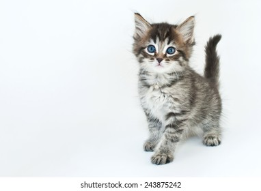 Cute kitten on a white background with copy space.