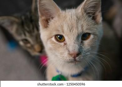 A cute kitten photobombing