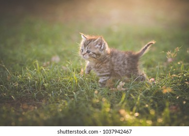 Cute kitten playing in the garden under sunlight