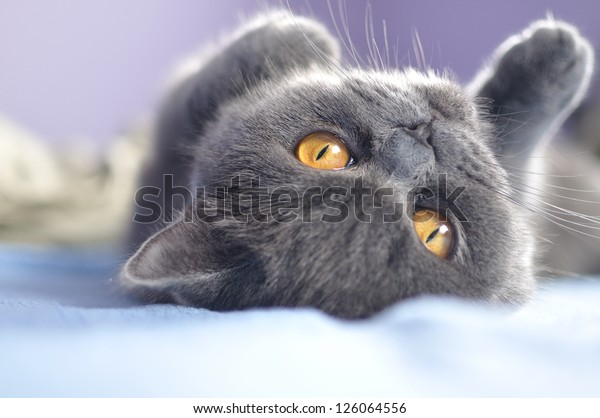 Cute kitten playing on the bed.