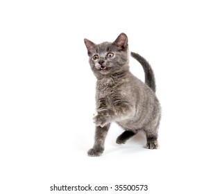 Cute kitten playing on a white background