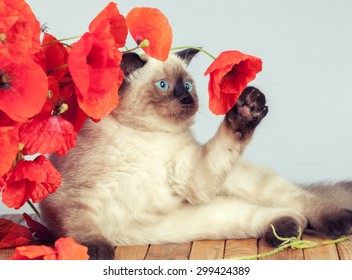 Cute kitten with poppies