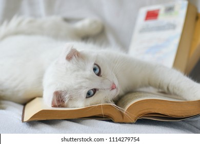 Cute kitten read a book