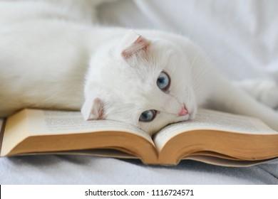 Cute kitten read a book