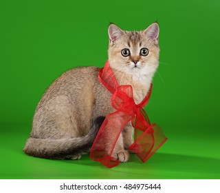 Cute kitten with red bow