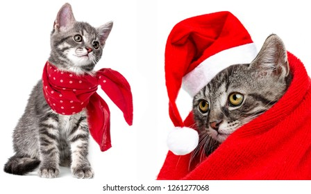 cute kitten with a red scarf and santa cap