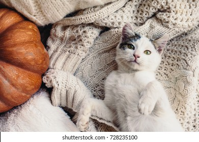 Cute kitten relaxing on warm sweater by autumn rustic home decor. Lazy cat resting on soft pullover. November weekend concept scene, top view.