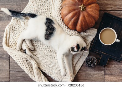 Cute kitten relaxing on warm sweater by autumn rustic home decor. Lazy cat resting on soft pullover, cup of coffee near it. November morning concept scene, top view.