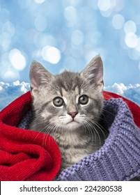 cute kitten in a scarf