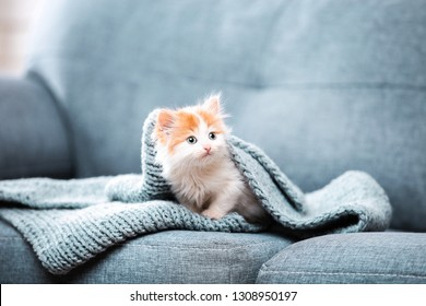 Cute kitten with scarf sitting on grey sofa