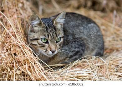cute kitten sits on straw