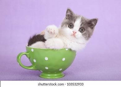 Cute kitten sitting inside green cup on lilac purple background