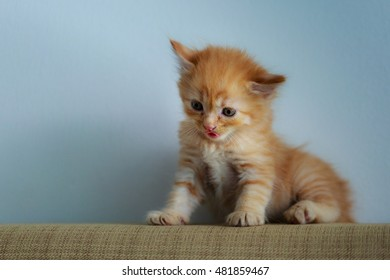 Cute Kitten sitting on the sofa