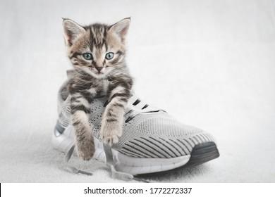 Kitten in Shoe Images, Stock Photos