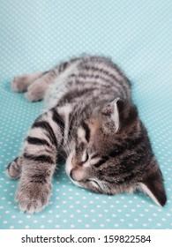 A cute kitten sleeping peacefully