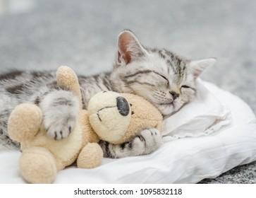 Cute kitten sleeping with toy bear