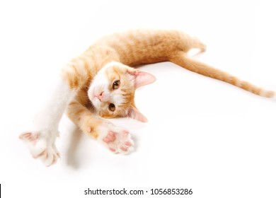 Cute Kitten Stretching on white background (orange Tabby Kitten 5. months old)