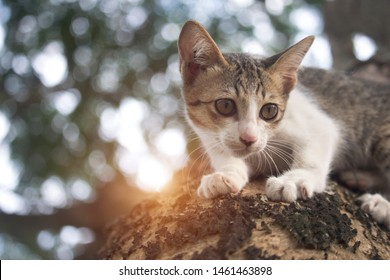The cute kitten is stuck on the tree, waiting for help from the rescue team.The gray cat on the branches and the concept of caring for pets