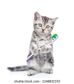 Cute kitten with a toothbrush. isolated on white background