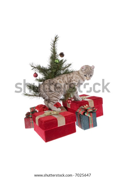 Cute kitten under Christmas tree isolated on white background