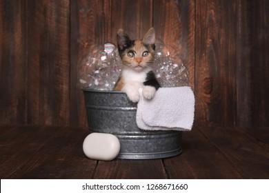 Cute Kitten in Washtub Getting Groomed By Bubble Bath