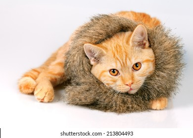 Cute kitten wearing fur scarf lying and looking at camera