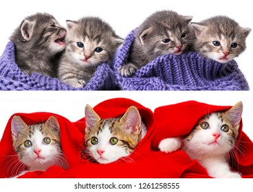 cute kittens collection isolated on a white background