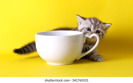 cute kittens with pastel containers on yellow background