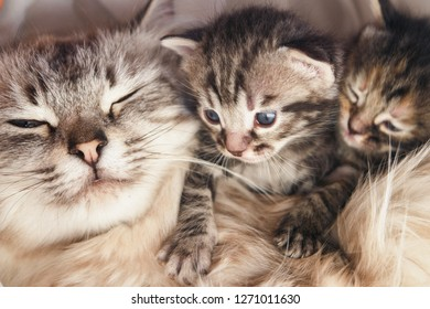 Cute kittens and their mother