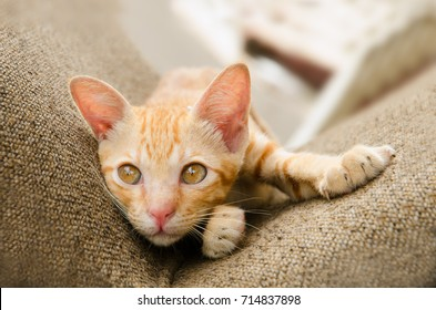 Cute Kitty Cat Lying On Brown Chair