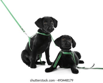 Cute Labrador puppies, isolated on white