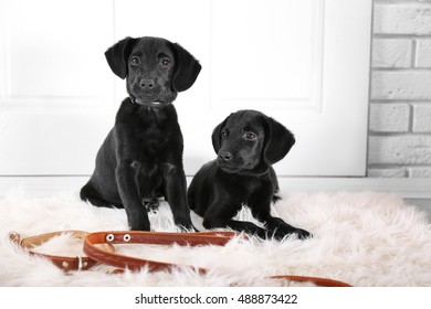 Cute Labrador puppies on white carpet