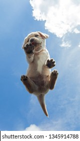 Cute labrador puppy dog seen from below on bright sky background eating pet biscuit
