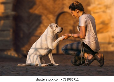 Cute labrador retriever dog puppy and young woman give a High Five by sunset