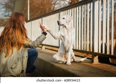 cute labrador retriever dog an woman give each other a high five handshake